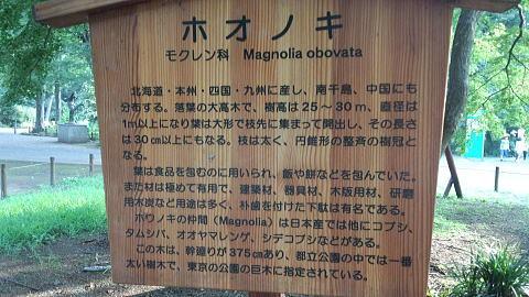 ホオノキの画像 p1_28